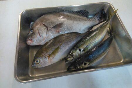 今日の入荷鮮魚!